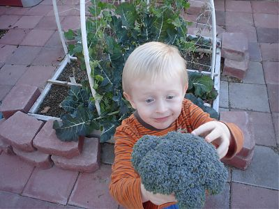 Quinan harvesting broccoli